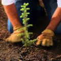 funding replanting trees